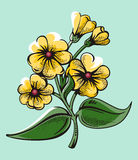 Flower illustration series Royalty Free Stock Photo