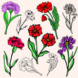 Flower illustration series Royalty Free Stock Photos