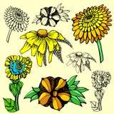 Flower illustration series Stock Image
