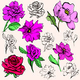 Flower illustration series Stock Photos