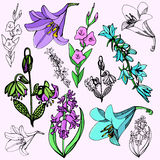 Flower illustration series Royalty Free Stock Photos