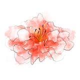 Flower illustration. Single beautiful flower isolated on white Stock Photos