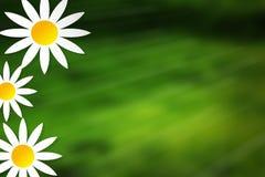 Flower ilustration green nature yellow backgroun. Nature Stock Photo