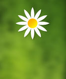 Flower ilustration green nature yellow backgroun. Nature Royalty Free Stock Photography