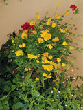 Flower image. Plant,Flower Stock Photos