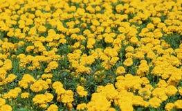 Flower image. Plant,Flower Stock Image