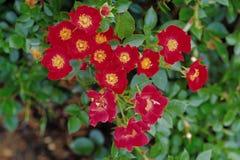 Flower image Stock Photos