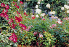 Flower image Stock Image