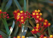 Flower image Stock Photography