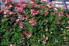 Flower image Royalty Free Stock Image