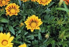 Flower image. Plant,Flower Stock Images