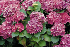 Flower image Royalty Free Stock Photos