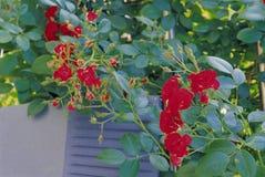 Flower image Royalty Free Stock Photo