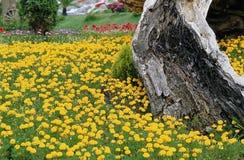 Flower image Stock Photo