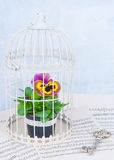 Flower In Cage Royalty Free Stock Images