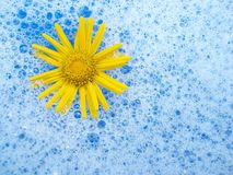 Free Flower In Foam Royalty Free Stock Photography - 1144267