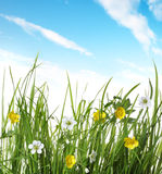 Flower In Green Grass Royalty Free Stock Image
