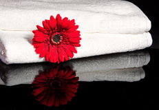 Flower inbetween two towels. Red flower inbetween two white towels with reflection in black, shiny surface Stock Images