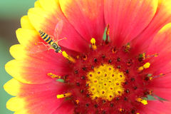 Flower and insect Stock Images