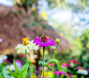 Flower and insect. Blooming flower filed in the morning stock photo
