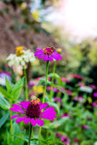 Flower and insect. Blooming flower filed in the morning royalty free stock image