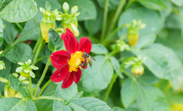 Flower and insect Stock Photography