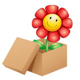 A flower inside the box Stock Photo