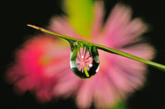 Flower inside the droplet Royalty Free Stock Photos