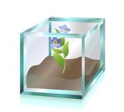 Flower inside glass cube Stock Photography