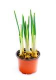 Flower Iris Royalty Free Stock Photos