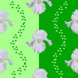 Flower of IRIS stock image