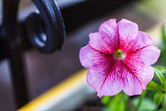 Flower and iron Stock Photography