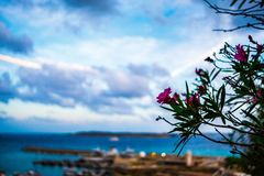 Flower on the island of Gozo royalty free stock photography
