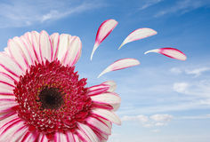 Flower isolated against blue sky-clipping path Stock Image