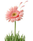 Flower isolated - clipping path Stock Images