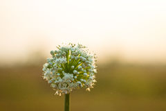 Spring onion stock images