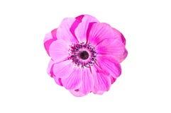 Flower isolated. Stock Photo