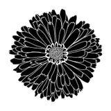 Flower isolated on white background. Stock Photo