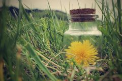 Flower in jar Stock Images