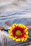 Flower on the jeans Stock Photo