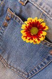 Flower on the jeans Royalty Free Stock Images