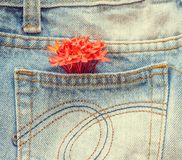 Flower on the jeans. Royalty Free Stock Images