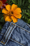 Flower and jeans trousers Stock Photo