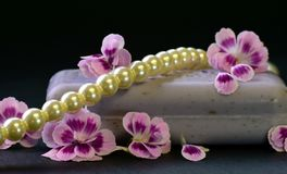 Flower, Jewellery, Blossom, Hair Accessory Stock Images