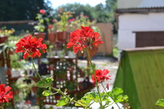 Flower Kalachik Stock Image
