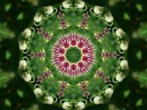 Flower kaleidoscope. Stock Photography