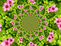 Flower kaleidoscope. This is kaleidoscope made of pink flowers and green leafage Stock Photos