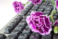 Flower on the keyboard Stock Images