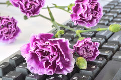 Flower on the keyboard Stock Photography