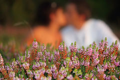 Flower kiss Stock Images